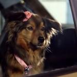Dog Romance in de nieuwe Citroën C3 commercial