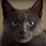 Sheba – Zelfs sex komt niet tussen de liefde voor katten